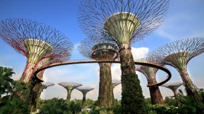 SuperTrees_Singapore_Vcube